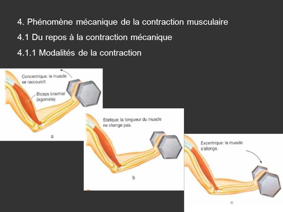 4. Phénomène mécanique de la contraction musculaire 4.1 Du repos à la contraction mécanique 4.1.1 Modalités de la contraction