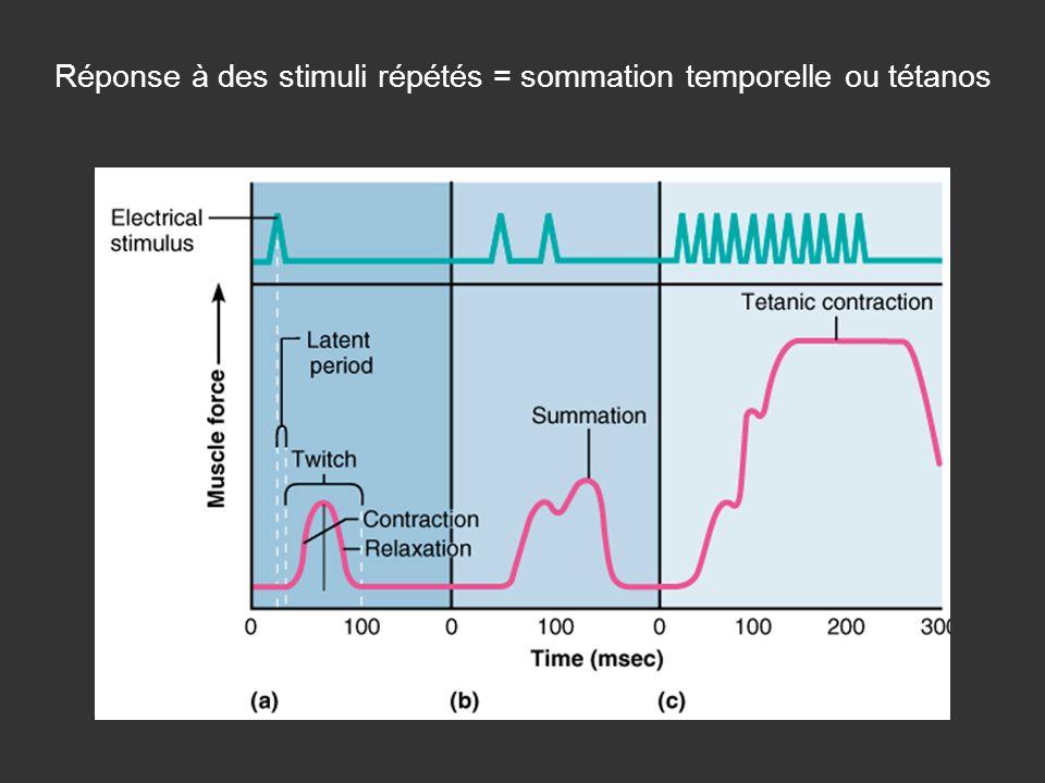 Réponse à des stimuli répétés = sommation temporelle ou tétanos