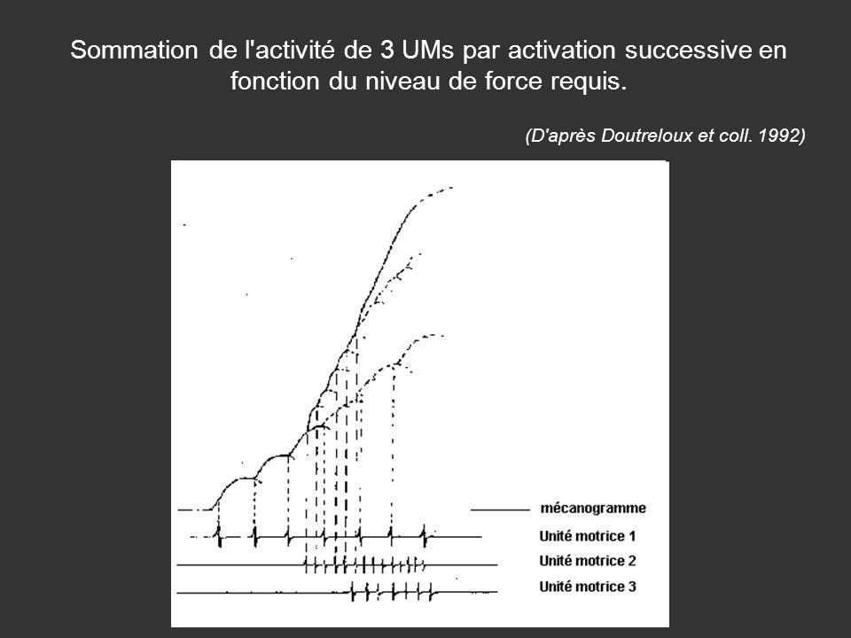Sommation de l'activité de 3 UMs par activation successive en fonction du niveau de force requis. (D'après Doutreloux et coll. 1992)