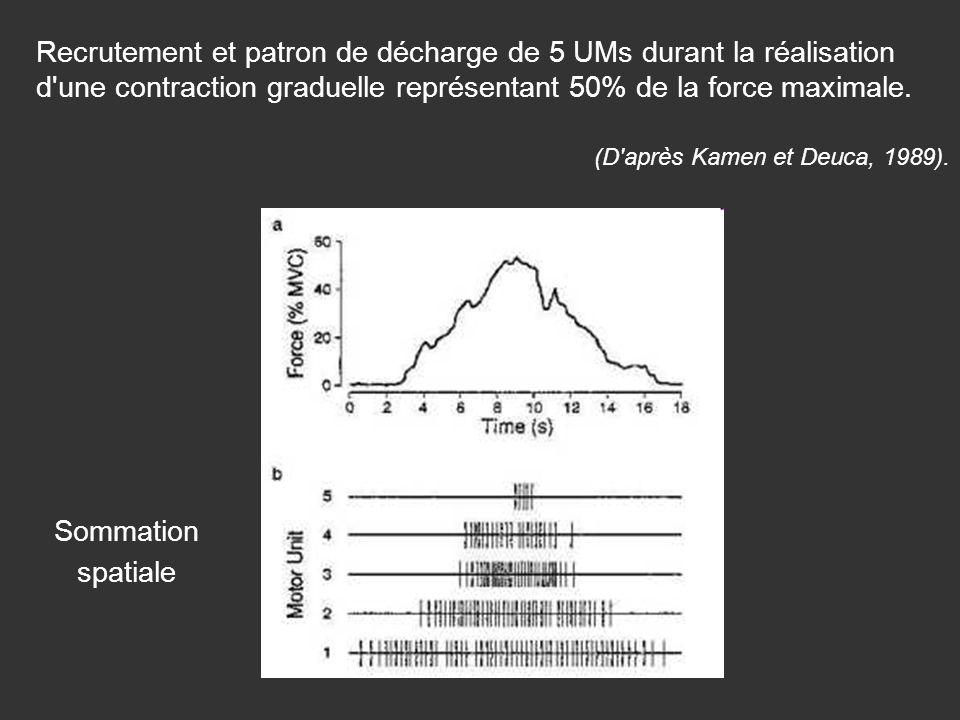 Recrutement et patron de décharge de 5 UMs durant la réalisation d'une contraction graduelle représentant 50% de la force maximale. (D'après Kamen et