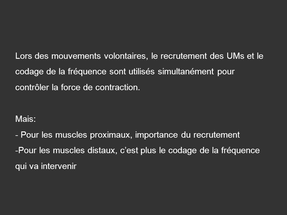 Lors des mouvements volontaires, le recrutement des UMs et le codage de la fréquence sont utilisés simultanément pour contrôler la force de contractio