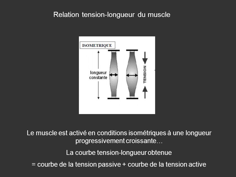 Relation tension-longueur du muscle Le muscle est activé en conditions isométriques à une longueur progressivement croissante… La courbe tension-longu