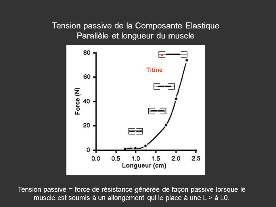 Tension passive de la Composante Elastique Parallèle et longueur du muscle Titine Tension passive = force de résistance générée de façon passive lorsq