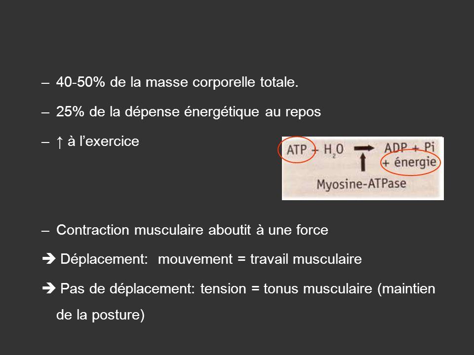 –40-50% de la masse corporelle totale. –25% de la dépense énergétique au repos – à lexercice –Contraction musculaire aboutit à une force Déplacement: