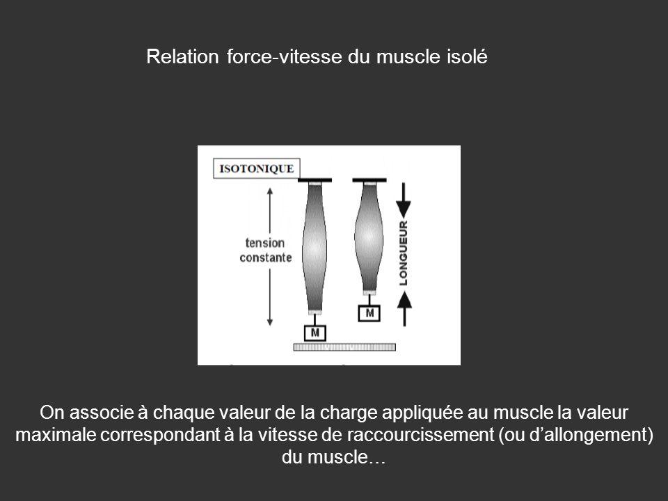Relation force-vitesse du muscle isolé On associe à chaque valeur de la charge appliquée au muscle la valeur maximale correspondant à la vitesse de ra