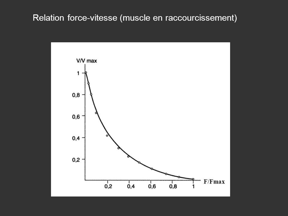 Relation force-vitesse (muscle en raccourcissement) F/Fmax