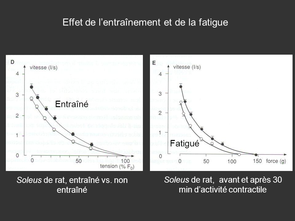 Effet de lentraînement et de la fatigue Entraîné Fatigué Soleus de rat, avant et après 30 min dactivité contractile Soleus de rat, entraîné vs. non en