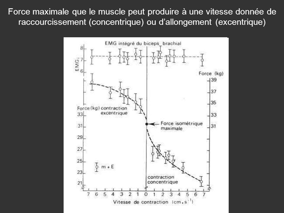 Force maximale que le muscle peut produire à une vitesse donnée de raccourcissement (concentrique) ou dallongement (excentrique)
