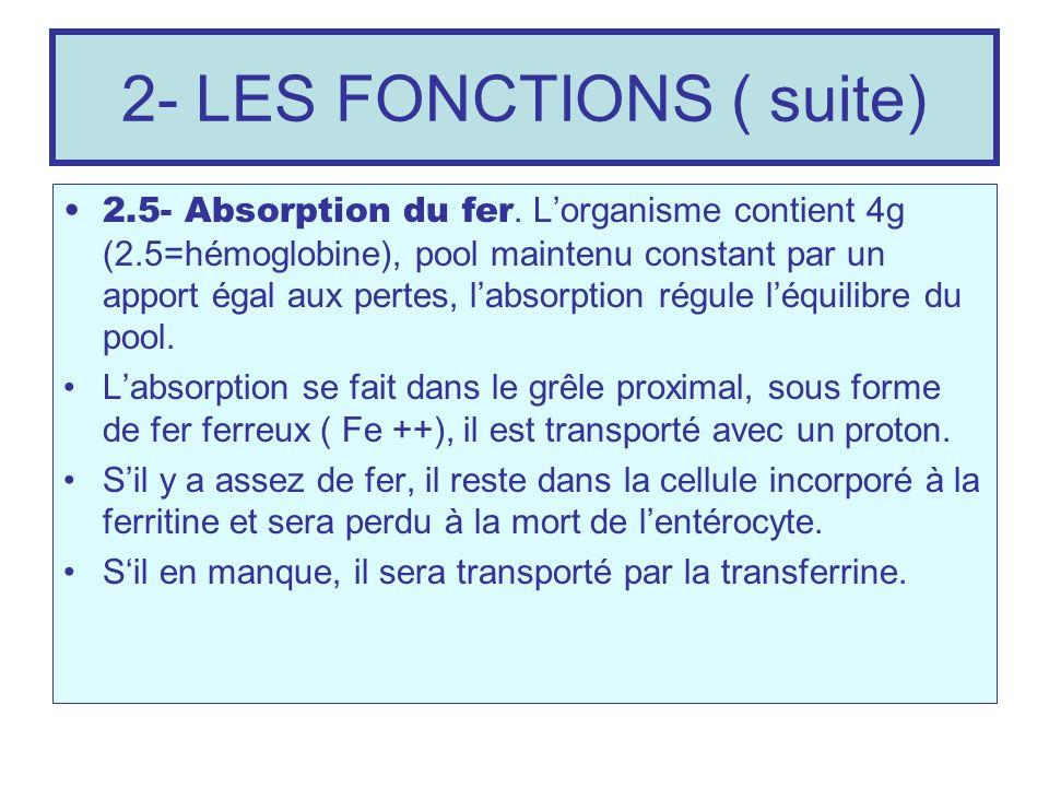 2- LES FONCTIONS ( suite) 2.5- Absorption du fer. Lorganisme contient 4g (2.5=hémoglobine), pool maintenu constant par un apport égal aux pertes, labs