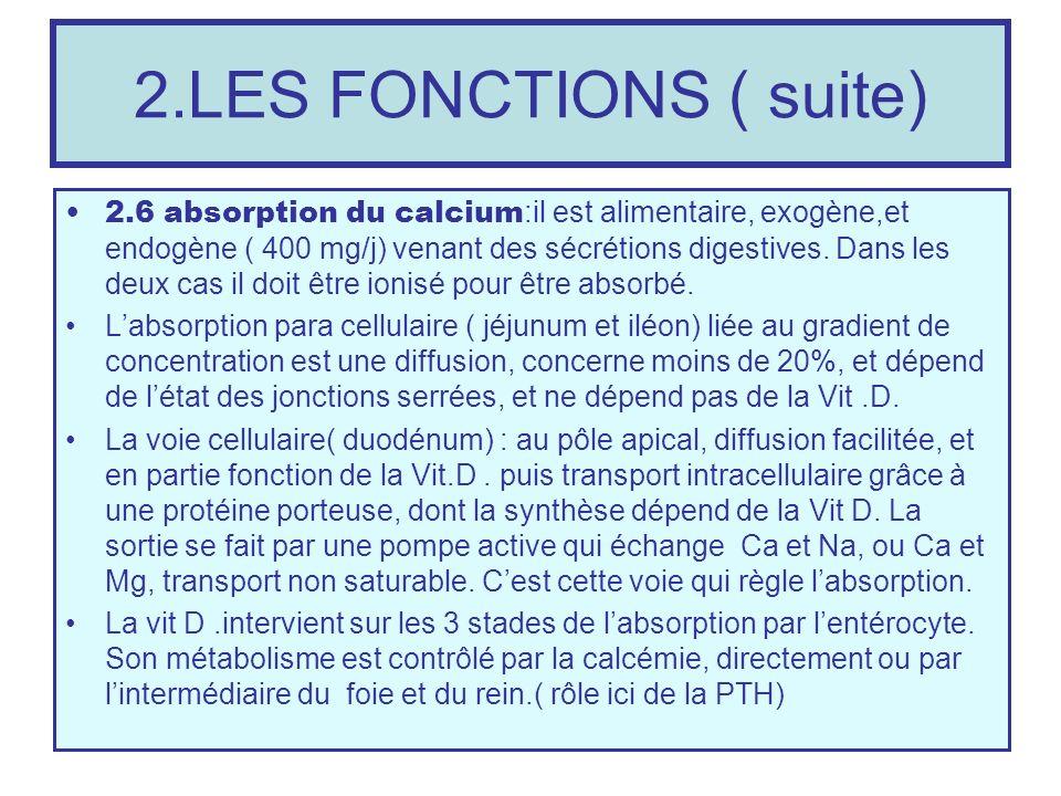 2.LES FONCTIONS ( suite) 2.6 absorption du calcium :il est alimentaire, exogène,et endogène ( 400 mg/j) venant des sécrétions digestives. Dans les deu