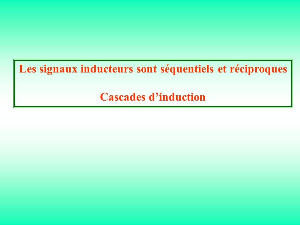 Les signaux inducteurs sont séquentiels et réciproques Cascades dinduction