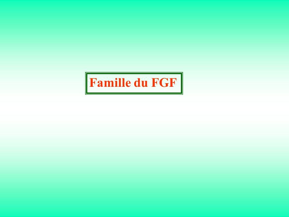 Famille du FGF