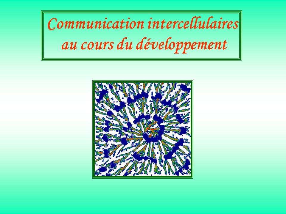 Communication intercellulaires au cours du développement