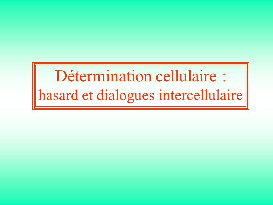 Détermination cellulaire : hasard et dialogues intercellulaire