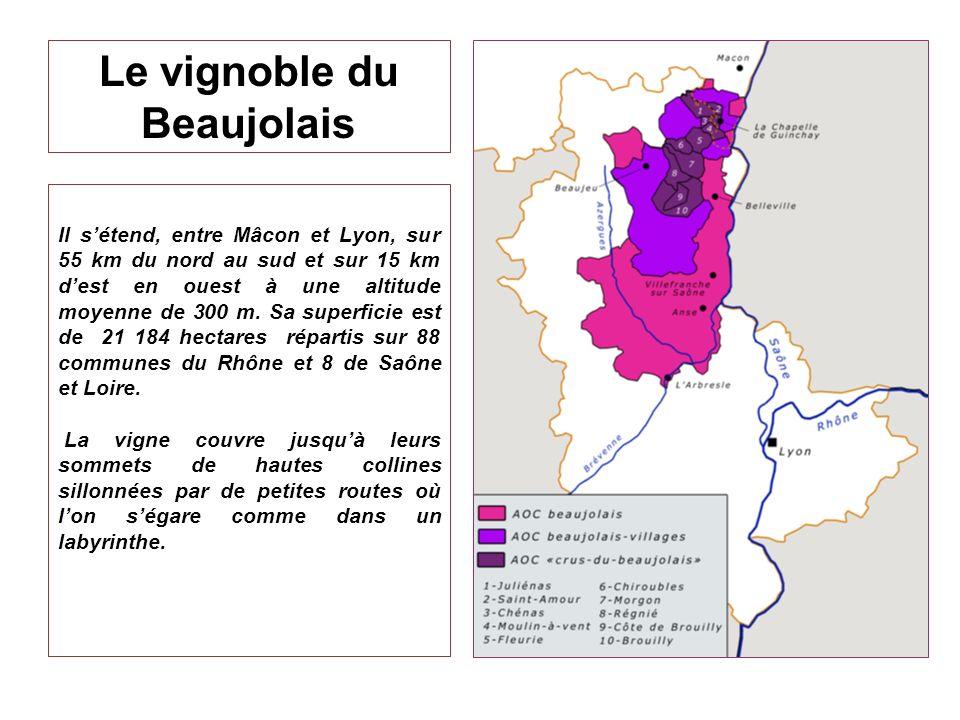 Le vignoble du Beaujolais Il sétend, entre Mâcon et Lyon, sur 55 km du nord au sud et sur 15 km dest en ouest à une altitude moyenne de 300 m. Sa supe