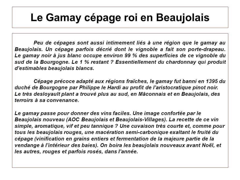 Le Gamay cépage roi en Beaujolais Peu de cépages sont aussi intimement liés à une région que le gamay au Beaujolais. Un cépage parfois décrié dont le