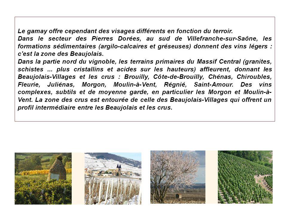 Chiroubles Situé à une altitude comprise entre 250 et 450 m, le Chiroubles est le cru le plus élevé du Beaujolais.
