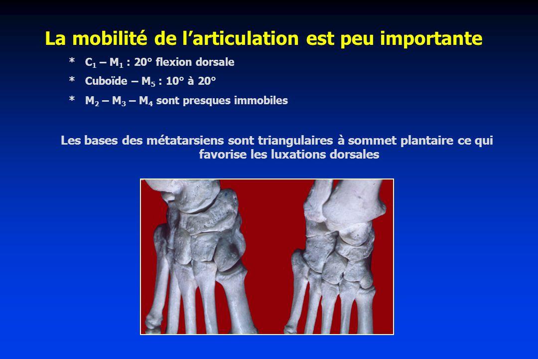 La mobilité de larticulation est peu importante * C 1 – M 1 : 20° flexion dorsale * Cuboïde – M 5 : 10° à 20° * M 2 – M 3 – M 4 sont presques immobile