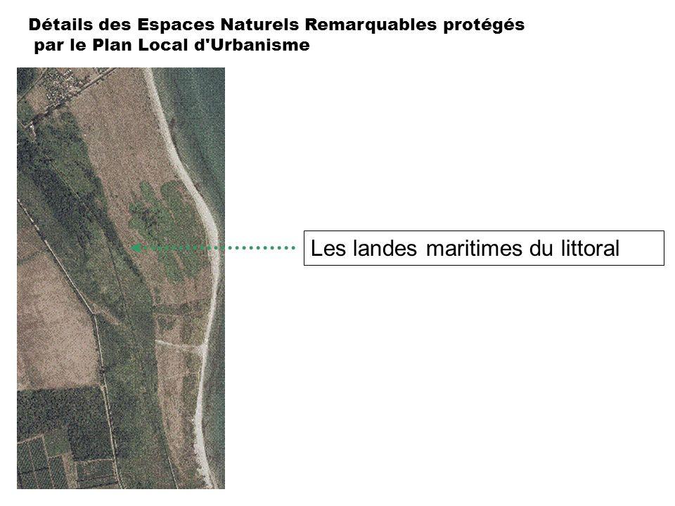 Détails des Espaces Naturels Remarquables protégés par le Plan Local d'Urbanisme Les landes maritimes du littoral