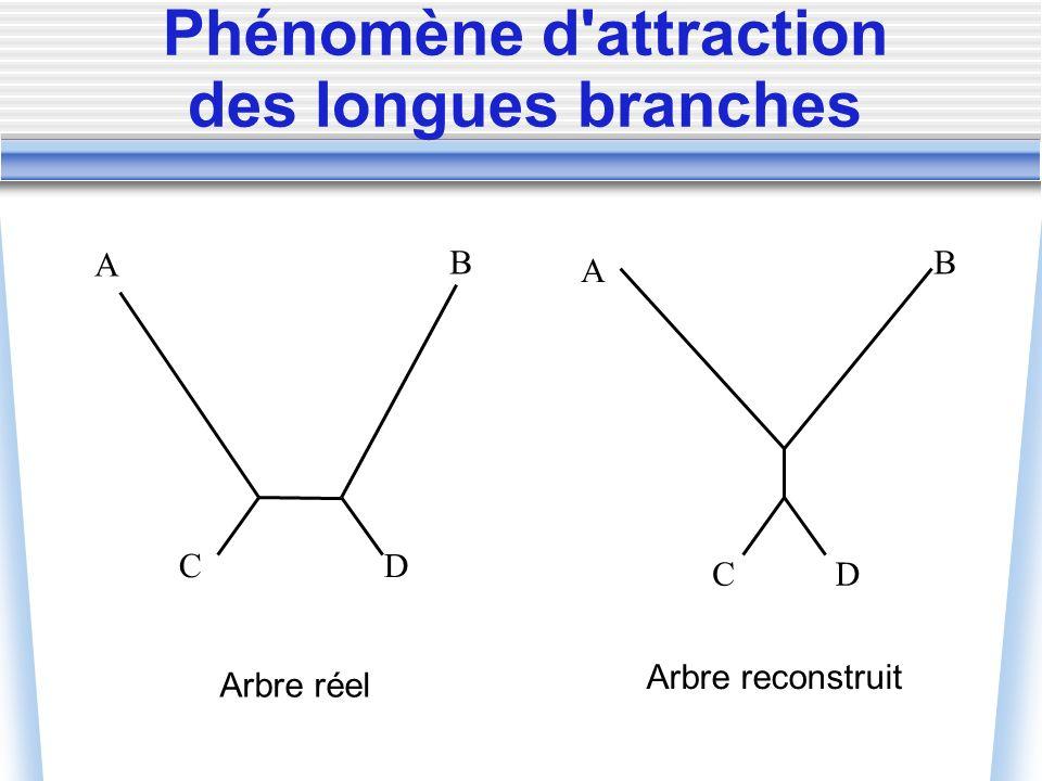 Phénomène d'attraction des longues branches A B D Arbre reconstruit A B DC C Arbre réel