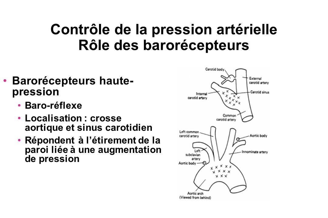 Contrôle de la pression artérielle Rôle des barorécepteurs Barorécepteurs haute- pression Baro-réflexe Localisation : crosse aortique et sinus carotid