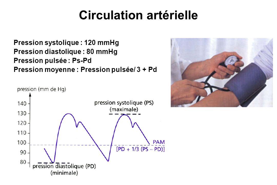 Cycle cardiaque CIV EjectionRIV RRPDiastasisSyst Aur.