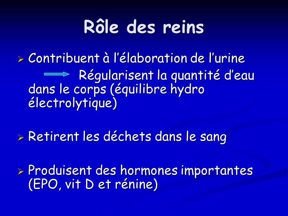 Rôle des reins Contribuent à lélaboration de lurine Contribuent à lélaboration de lurine Régularisent la quantité deau dans le corps (équilibre hydro