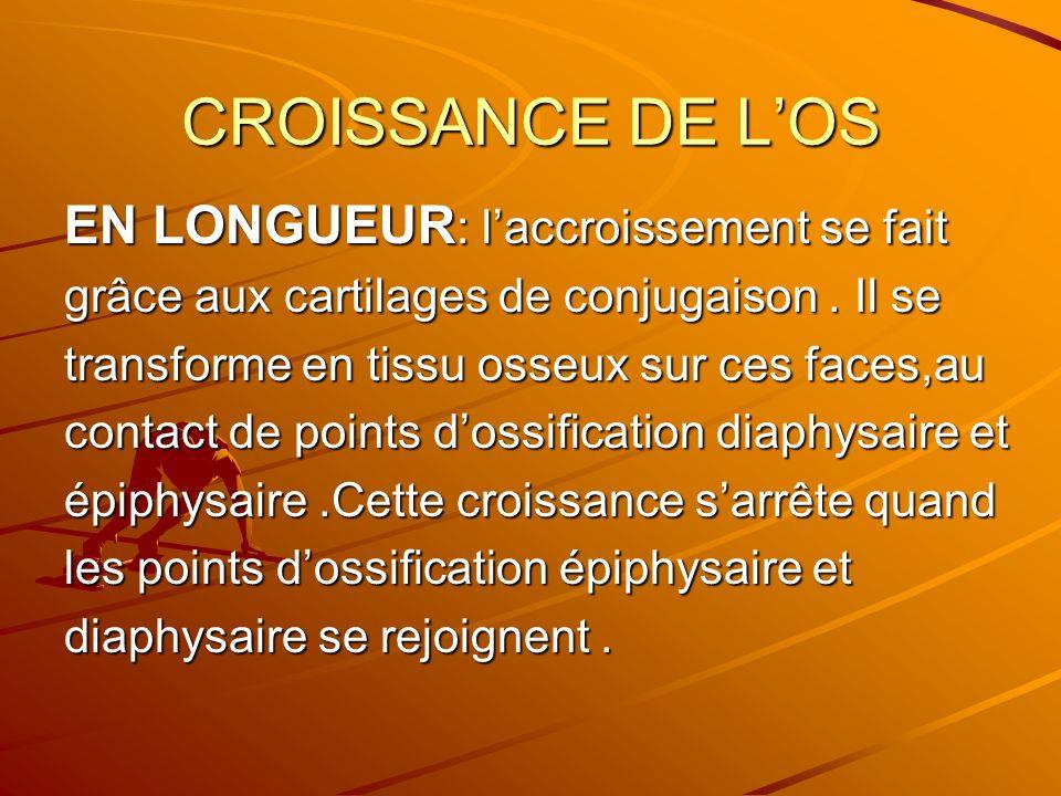 CROISSANCE DE LOS EN LONGUEUR : laccroissement se fait grâce aux cartilages de conjugaison. Il se transforme en tissu osseux sur ces faces,au contact