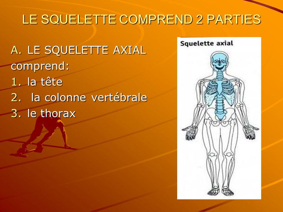 LE SQUELETTE COMPREND 2 PARTIES A.LE SQUELETTE AXIAL comprend: 1.la tête 2. la colonne vertébrale 3.le thorax