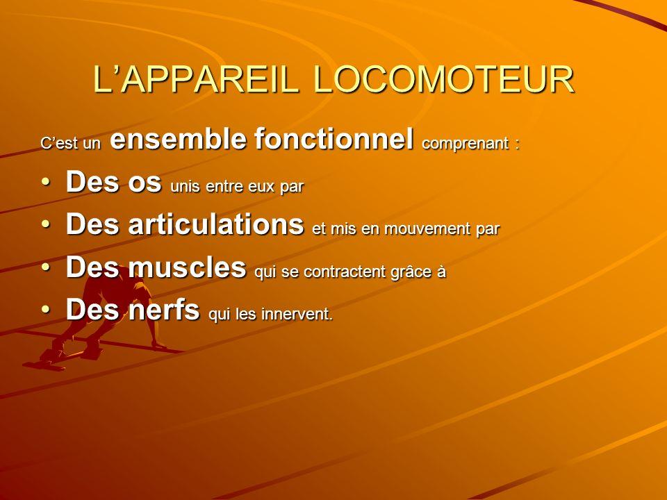 LAPPAREIL LOCOMOTEUR Cest un ensemble fonctionnel comprenant : Des os unis entre eux parDes os unis entre eux par Des articulations et mis en mouvemen