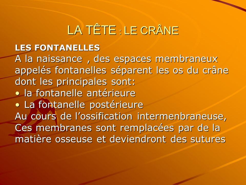 LA TÊTE : LE CRÂNE LES FONTANELLES A la naissance, des espaces membraneux appelés fontanelles séparent les os du crâne dont les principales sont: la f