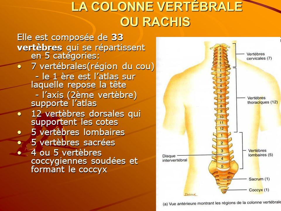2. LA COLONNE VERTÉBRALE OU RACHIS Elle est composée de 33 vertèbres qui se répartissent en 5 catégories: 7 vertébrales(région du cou)7 vertébrales(ré
