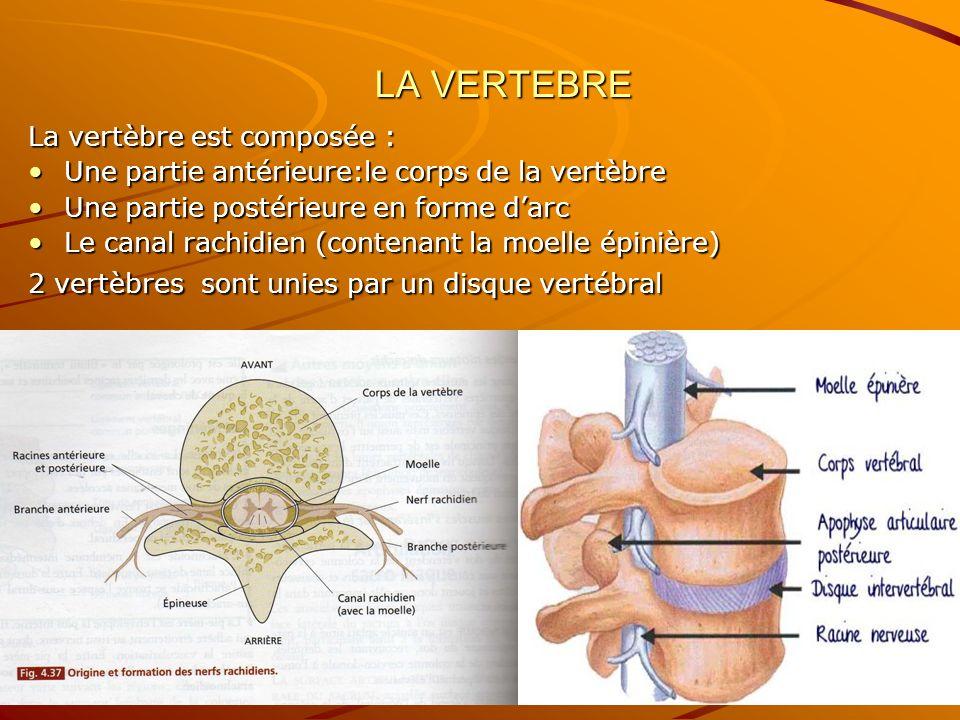 LA VERTEBRE La vertèbre est composée : Une partie antérieure:le corps de la vertèbreUne partie antérieure:le corps de la vertèbre Une partie postérieu