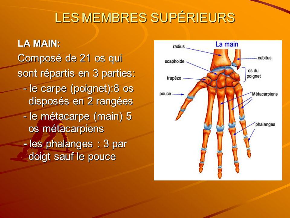 LES MEMBRES SUPÉRIEURS LA MAIN: Composé de 21 os qui sont répartis en 3 parties: - le carpe (poignet):8 os disposés en 2 rangées - le carpe (poignet):