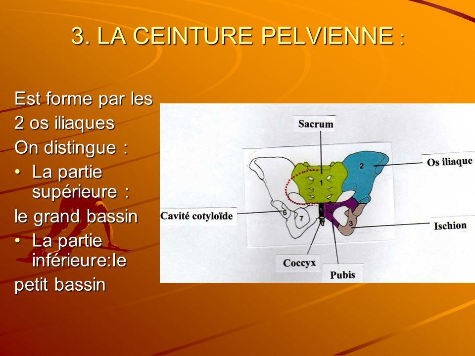 3. LA CEINTURE PELVIENNE : Est forme par les 2 os iliaques On distingue : La partie supérieure :La partie supérieure : le grand bassin La partie infér
