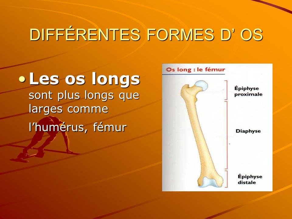 DIFFÉRENTES FORMES D OS Les os longs sont plus longs que larges comme lhumérus, fémurLes os longs sont plus longs que larges comme lhumérus, fémur