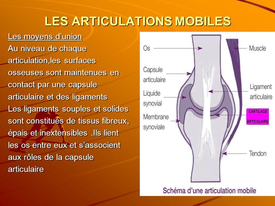 LES ARTICULATIONS MOBILES Les moyens dunion Au niveau de chaque articulation,les surfaces osseuses sont maintenues en contact par une capsule articula