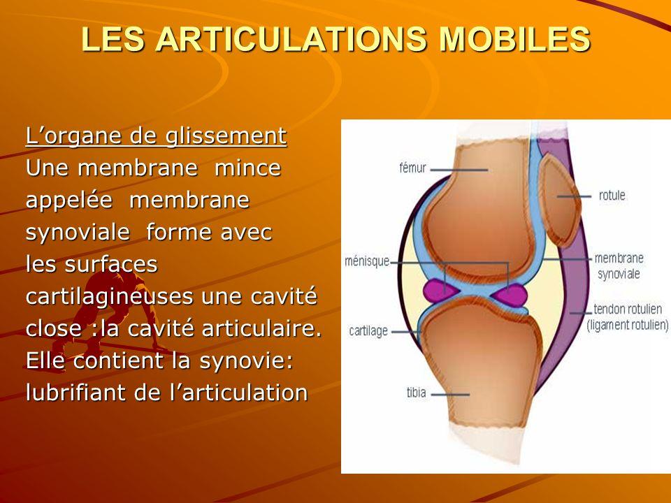 LES ARTICULATIONS MOBILES Lorgane de glissement Une membrane mince appelée membrane synoviale forme avec les surfaces cartilagineuses une cavité close