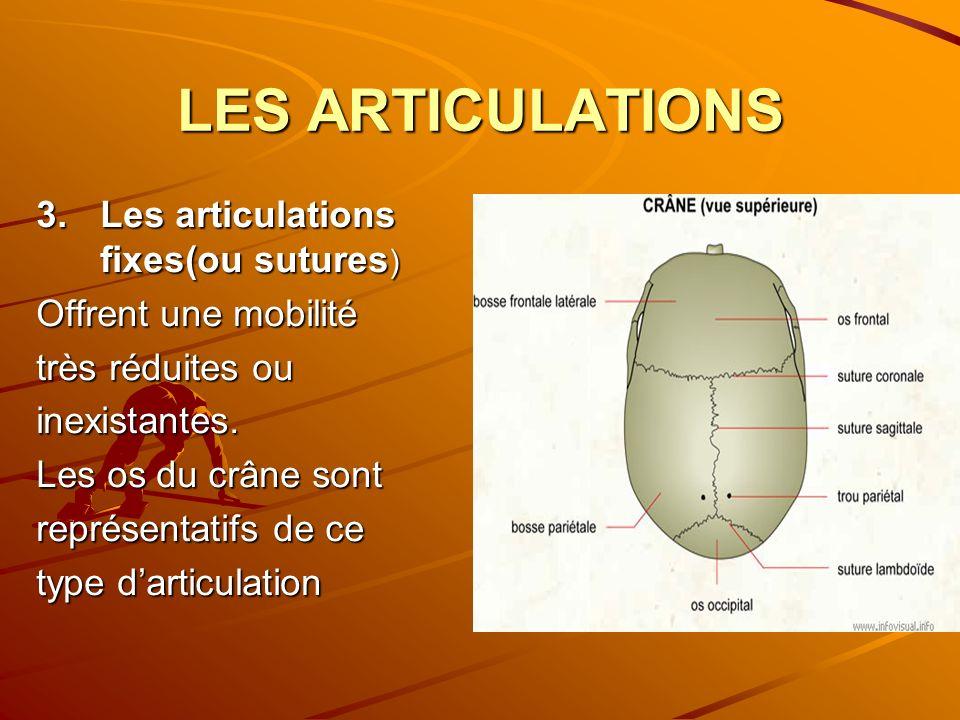 LES ARTICULATIONS 3.Les articulations fixes(ou sutures ) Offrent une mobilité très réduites ou inexistantes. Les os du crâne sont représentatifs de ce