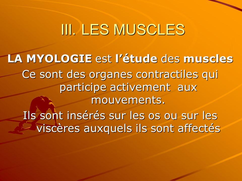 III. LES MUSCLES LA MYOLOGIE est létude des muscles Ce sont des organes contractiles qui participe activement aux mouvements. Ils sont insérés sur les
