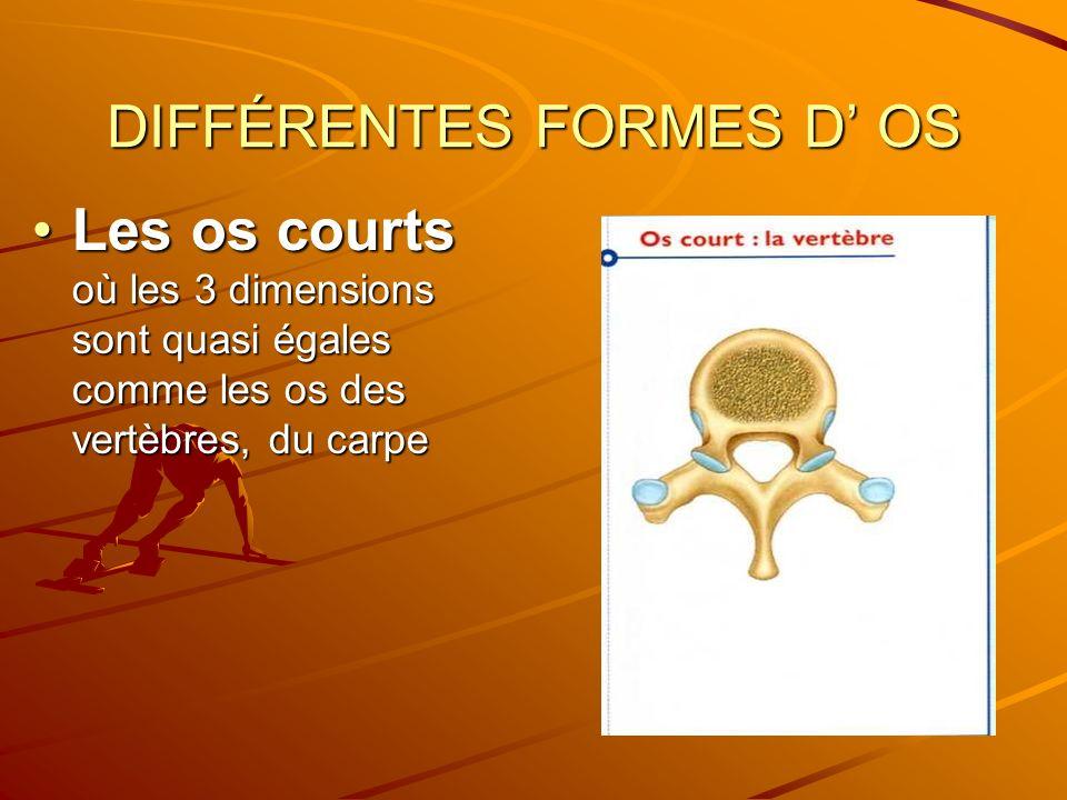 DIFFÉRENTES FORMES D OS Les os courts où les 3 dimensions sont quasi égales comme les os des vertèbres, du carpeLes os courts où les 3 dimensions sont