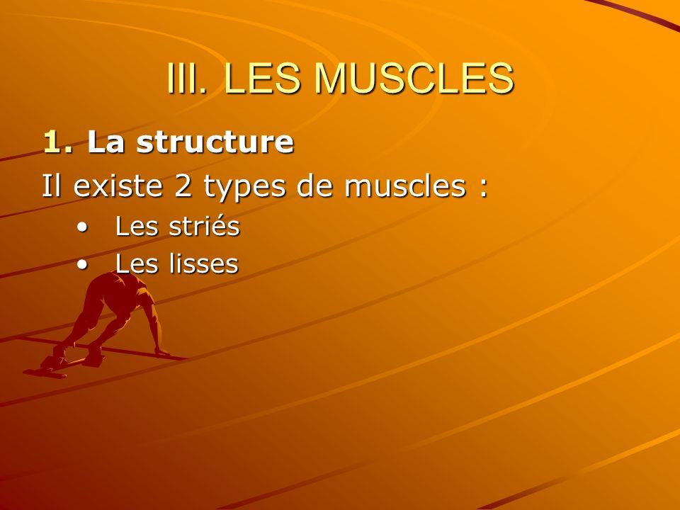 III. LES MUSCLES 1.La structure Il existe 2 types de muscles : Les striésLes striés Les lissesLes lisses