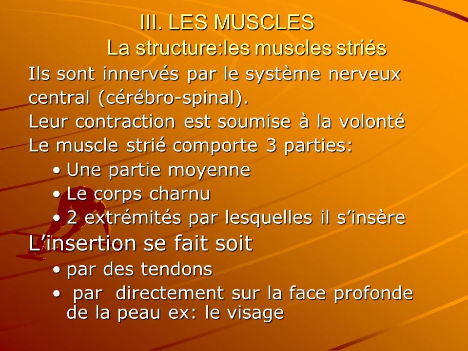 III. LES MUSCLES La structure:les muscles striés Ils sont innervés par le système nerveux central (cérébro-spinal). Leur contraction est soumise à la