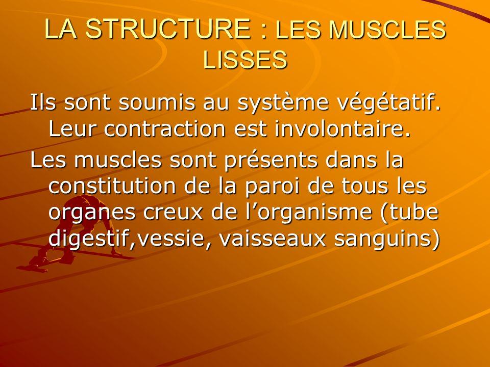 LA STRUCTURE : LES MUSCLES LISSES Ils sont soumis au système végétatif. Leur contraction est involontaire. Les muscles sont présents dans la constitut