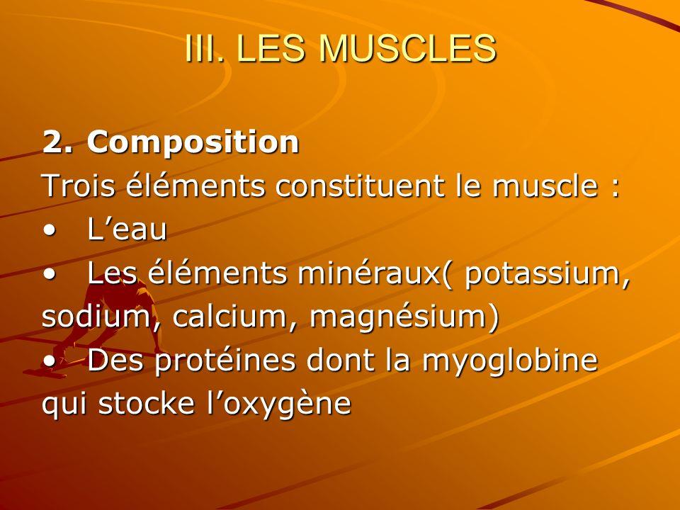 III. LES MUSCLES 2.Composition Trois éléments constituent le muscle : LeauLeau Les éléments minéraux( potassium,Les éléments minéraux( potassium, sodi
