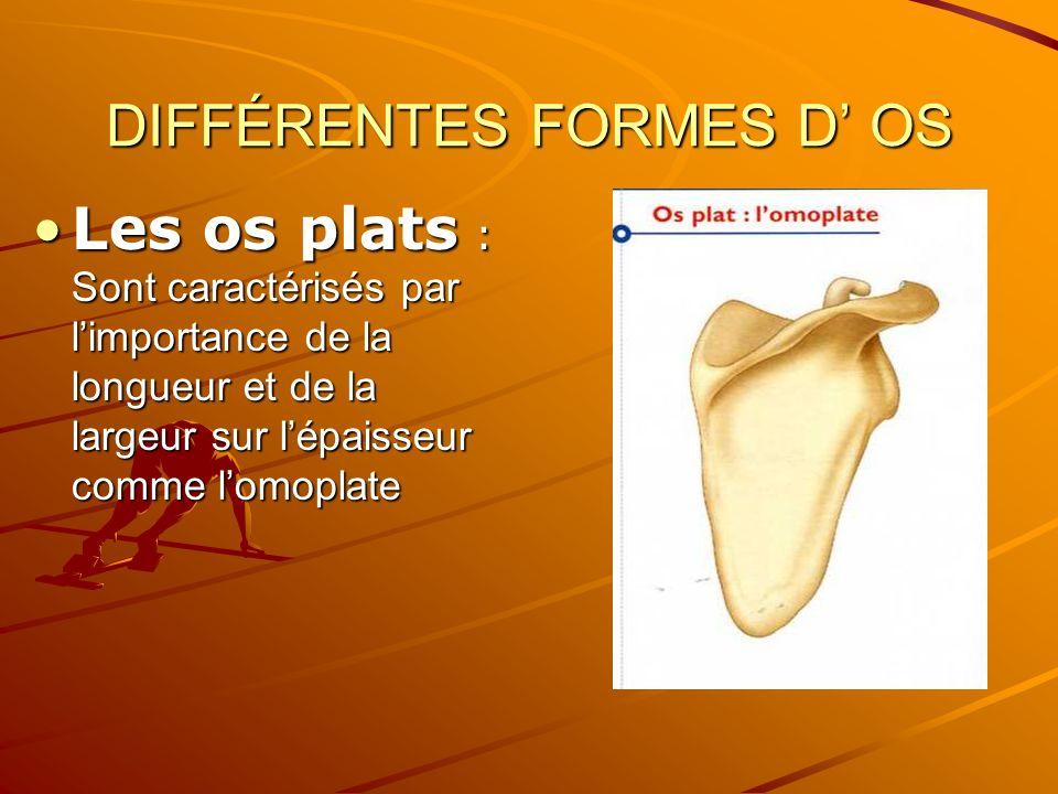 DIFFÉRENTES FORMES D OS Les os plats : Sont caractérisés par limportance de la longueur et de la largeur sur lépaisseur comme lomoplateLes os plats :