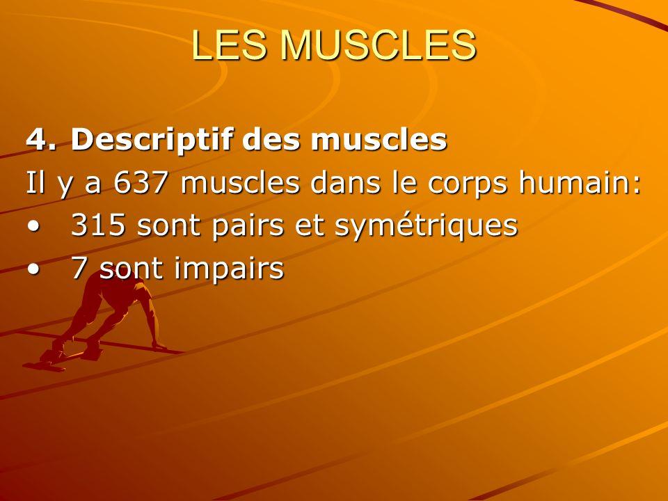 LES MUSCLES 4.Descriptif des muscles Il y a 637 muscles dans le corps humain: 315 sont pairs et symétriques315 sont pairs et symétriques 7 sont impair