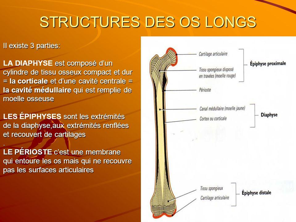 STRUCTURES DES OS LONGS Il existe 3 parties: est composé dun LA DIAPHYSE est composé dun cylindre de tissu osseux compact et dur = la corticale et dun