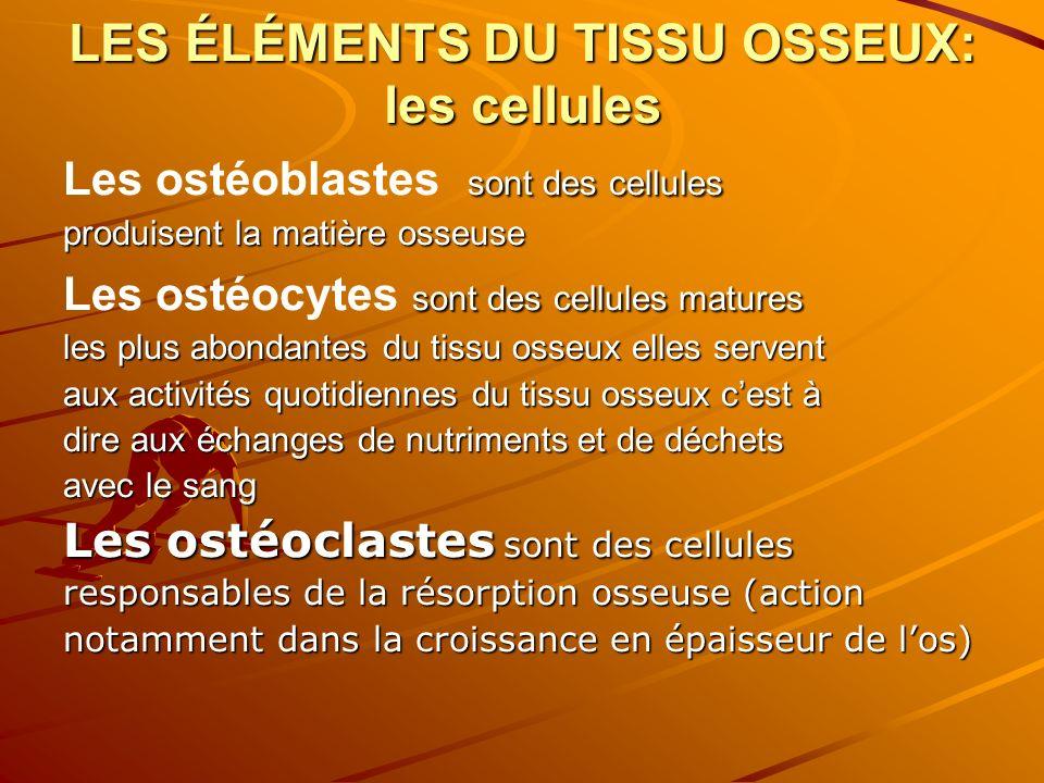 STRUCTURES DU TISSU OSSEUX Le tissu osseux compact cest un tissu dur, il constitue lenveloppe de tous les os et la majeur partie de la diaphyse.Ce tissu qui le constitue contient des canaux (canaux dhavers)où passant les vaisseaux et les nerfs Le tissu osseux spongieux il constitue la plus grande partie des épiphyses des os longs.Il contient le tissu «hématopoïétique »,lieu délaboration des cellules sanguines «hématopoïétique »,lieu délaboration des cellules sanguines