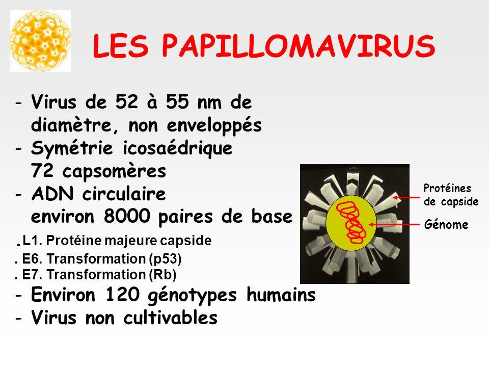 LES PAPILLOMAVIRUS - Virus de 52 à 55 nm de diamètre, non enveloppés - Symétrie icosaédrique 72 capsomères - ADN circulaire environ 8000 paires de bas